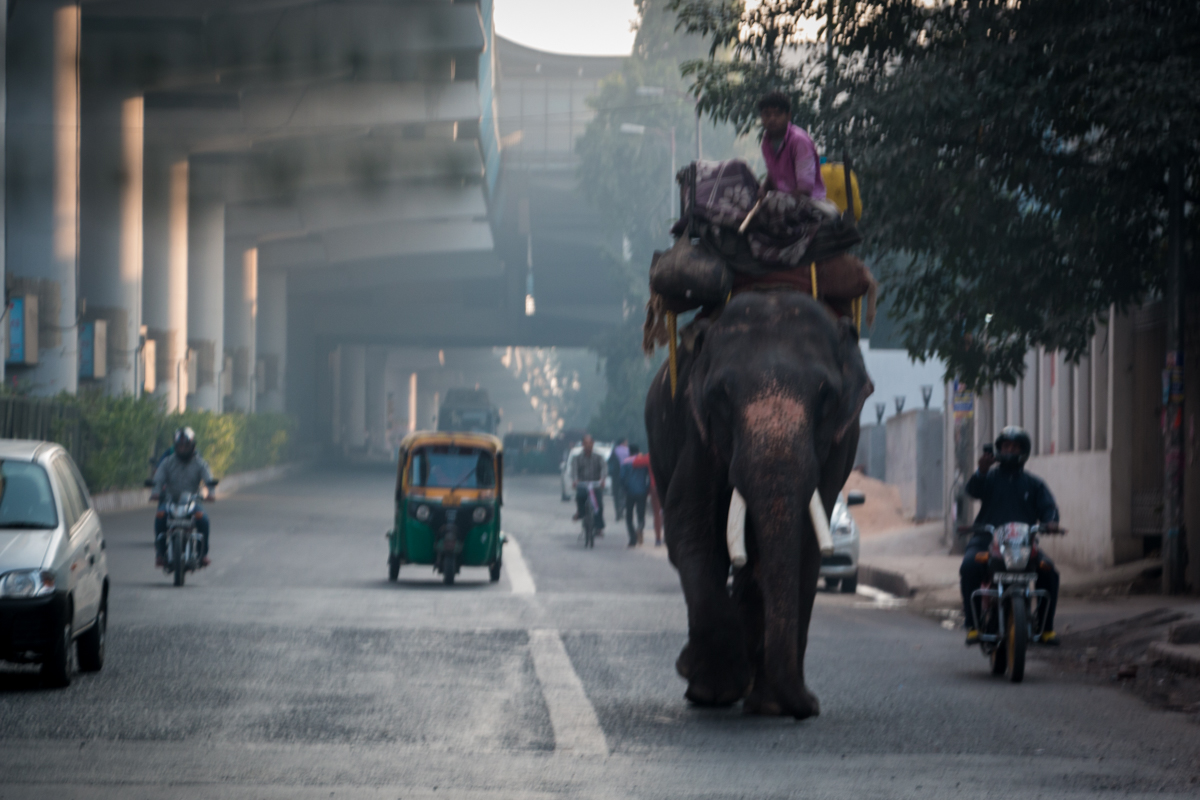 Picture of the day: Elephant in Delhi