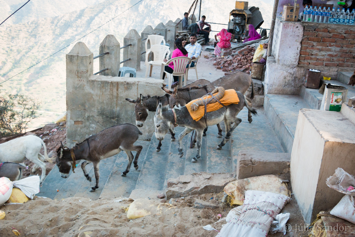 India impressions: working donkeys