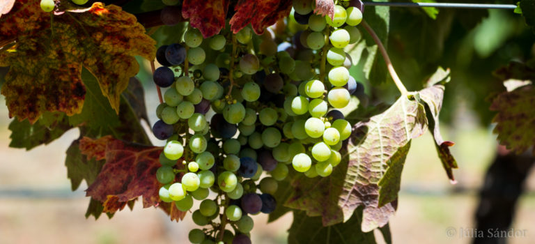 At the source of good wines – wine tasting in Chile