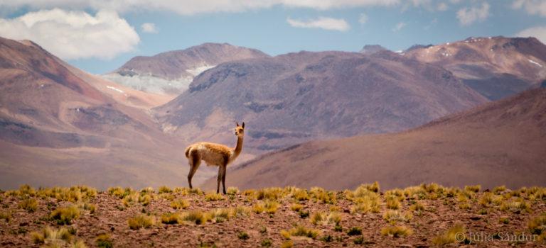 7 reasons to visit San Pedro de Atacama, Chile