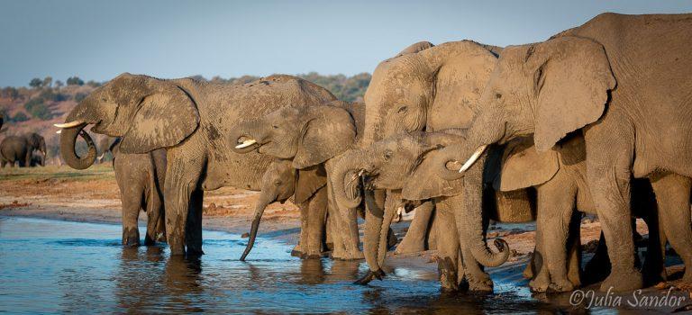 Chobe: Pure Africa where 4 Countries Meet