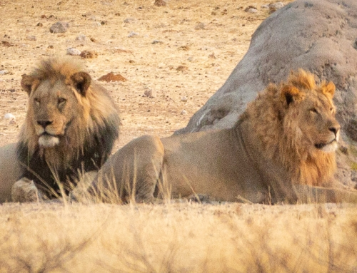 Etosha – all about animals