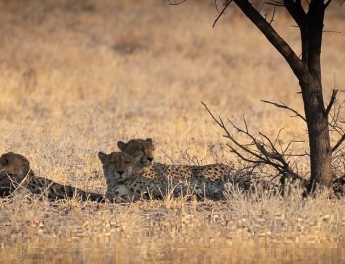 Central Kalahari – a Rough Piece of Nature