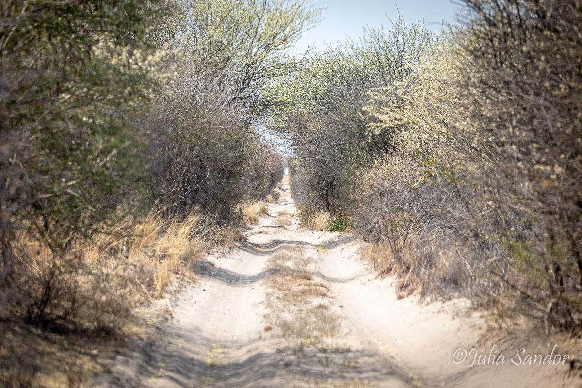 Main road in the Kalahari