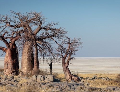 A glimpse of eternity: Kubu Island, Botswana