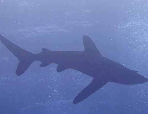 Dive safari in the Red Sea